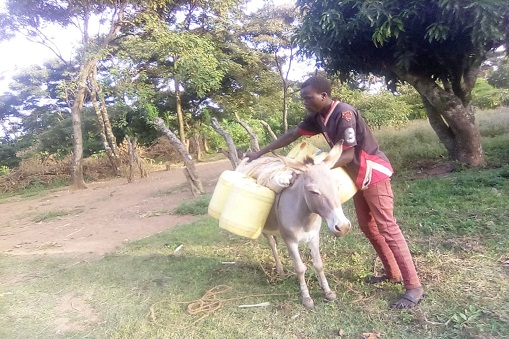 farm-action